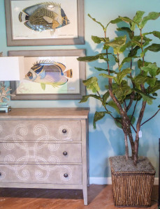 fiddle leaf fig tree_edited-1